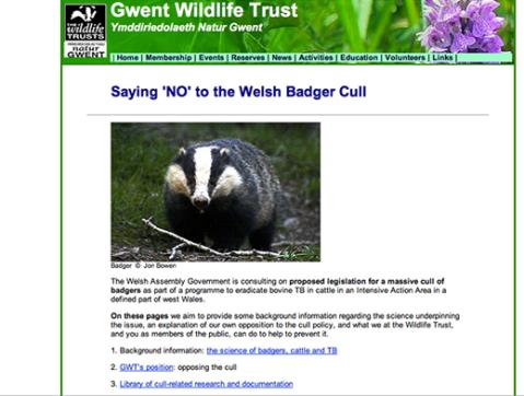 Print screen badger original by Jon Bowen